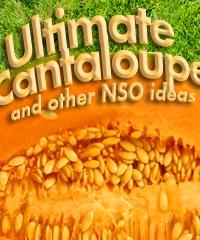 nso ultimate canteloup